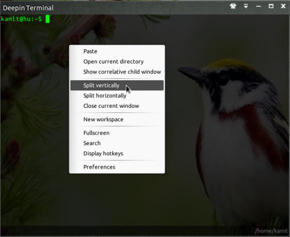 Linux Deepin Terminal settings